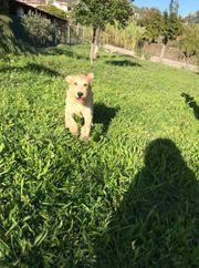 6 Beagle Mix 5 Monate
