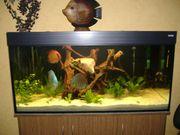 Aquarium 500l mit Zubehör