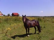 Baugrundstück auf Insel Wolin Polen