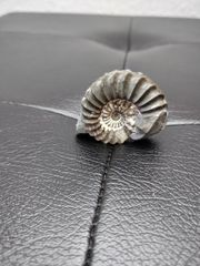 ammonit fossilie mineralien heilstein