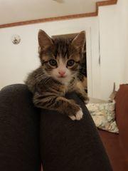 3 kleine liebevolle katzenbabys zu