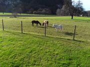 Einstellplatz für Pony Kleinpferd mit