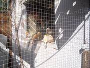 Wir verkaufen unseren jungen Kanarienvogel