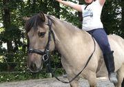 Reitbeteiligung Pflegepferd Zweitreiter eigenes Pferd