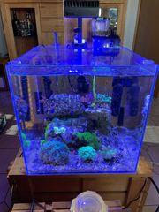 Nano Riff 90Liter Cube Meerwasser