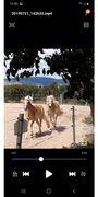 Pferde - Haflinger stute zu verkaufen