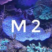 Korallen 5-20
