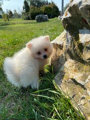 süßer Hund sucht neues Zuhause