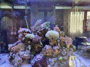 Eheim Meerwasser Aquarium Meerwasseraquarium Komplettset