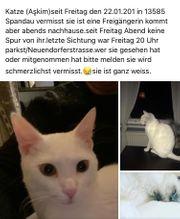 13585-Spandau weiße Katze gesucht
