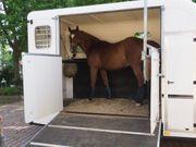 Pferdeanhänger Pkw-Anhänger Pferdetransportanhänger EQUI-TREK Anhänger