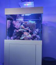 Meerwasseraquarium 250l komplett mit Inhalt