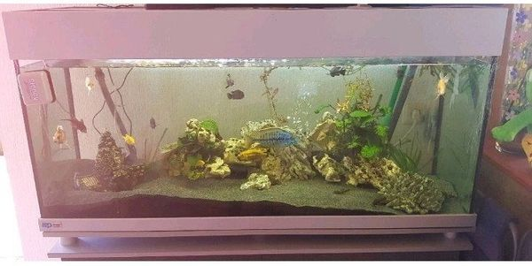 Aquarium ca 240l