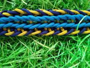 Blue s Erleuchtung Hundehalsband aus