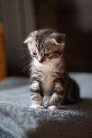 Kätzchen Katzen Katzenbabys