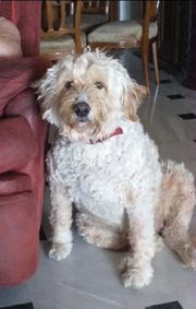 Lola16 ältere Hundedame in Not