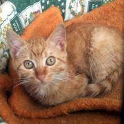 Kleines Kätzchen Rufina sucht ihre