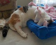 Liebevolles Zuhause für süße Katze
