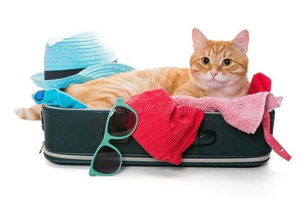 Katzenbetreuung in Weingarten - Katzenpension-