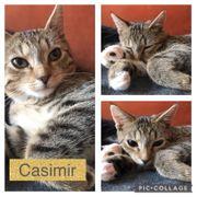 Baby Kater Kitten Casimir geimpft