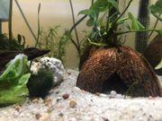 Aquarium Kokosnuss Häuschen