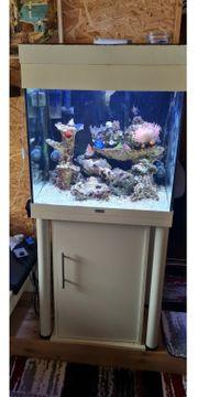Meerwasser Aquarium