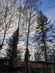 Brennholz Bäume zum selber fällen