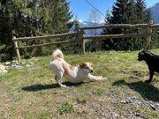 Rudi lieber Hundemann ca 6