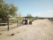 Offenstall frei für Herdenverträgliche Pferde