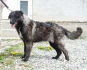 Hundemädchen Arisa 09 19 sucht