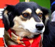 ORELIA - liebes verspieltes Hundemädchen
