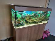 Aquarium ca 240 Liter komplett