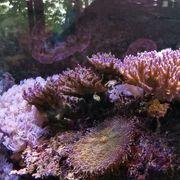 Komplettes Meerwasseraquarium 490 Liter 140cmx70cmx50cm