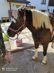 Biete Reitbeteiligung auf liebem Pferdchen
