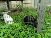 Kaninchen Kinder 16 Wochen