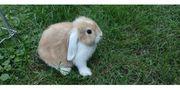 bezaubernd süße Kaninchen Kinder suchen