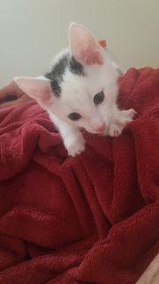 Kitten sucht ein Zuhause