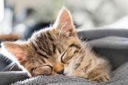 Suchen Katzenbaby