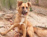 Fanny hübsches Hundemädchen ca 11