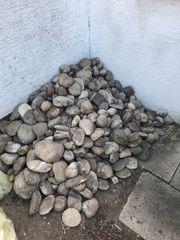 Verschiedene Zierkies Steine zu verkaufen