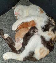 Paty und ihre Babies