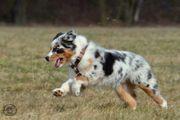 Hundegesundheit auf natürliche artgerechte Weise