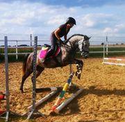 Pony Stute für Sport und