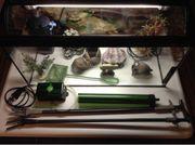Wegen Hobbyaufgabe 60l Aquarium günstig