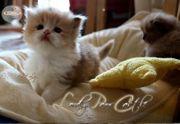 BLH Katzen- Kinder suchen ein