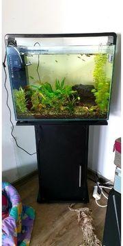 Aquarium komplett Abgabe