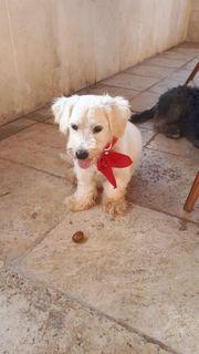 Hunde In Euskirchen Kaufen Und Verkaufen Bei Quoka De