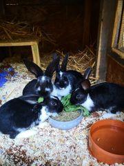 4 junge Kaninchen suchen noch