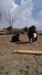 Kindergeburtstagsparty auf dem Ponyhof