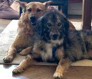 Hundekumpels suchen ein Zuhause